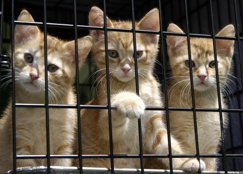 Calendars can help animal shelters raise awareness