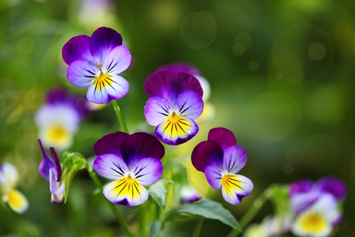 Pansies, puddles and promotional products